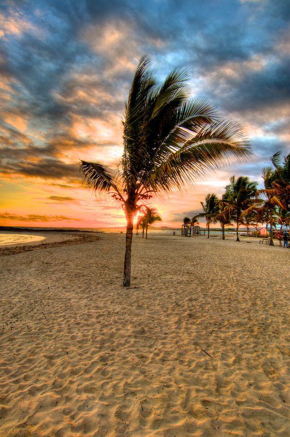 Galapagos Palm Tree