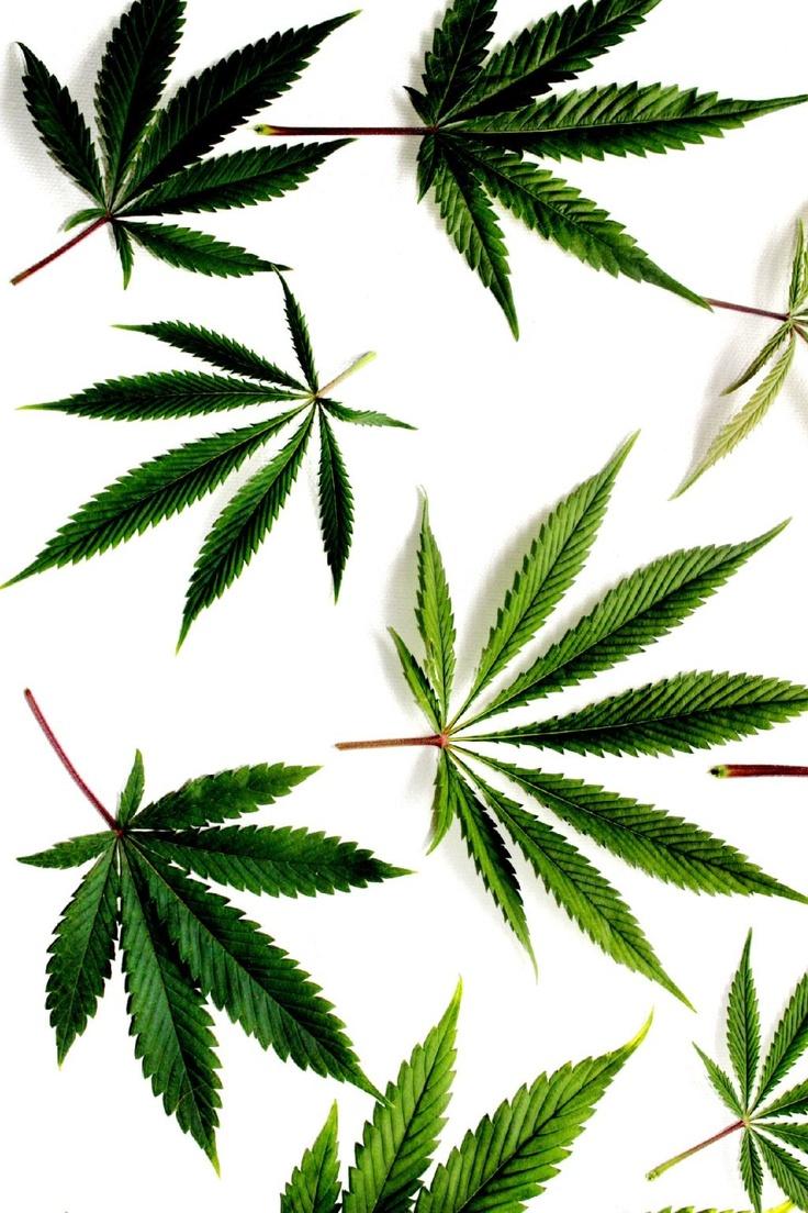INDIVIDUUM   graphic lab - hemp leaves …