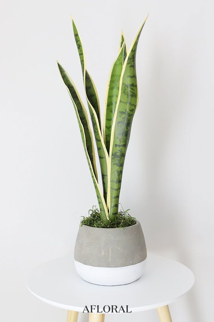 Artificial Mother In Law S Tongue House Plant 24 Tall Hanging Plants Indoor Plants Hanging Plants