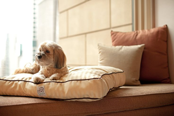 In #myluxlist: travel with my master in luxury hotels... What's on your Luxury List?  #veryimportantdog http://milan.park.hyatt.com/en/hotel/news-and-events/news-listing/vidveryimportantdogprogramme.html?src=mil_ph_fb_vid #dog #luxury #milan