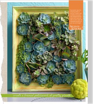 Vertical garden. Clipped from Better Homes and Gardens using Netpage.