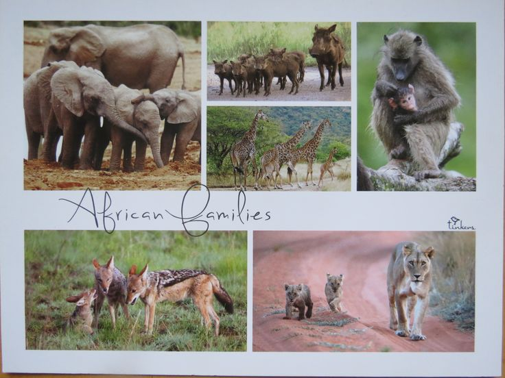 African animal families