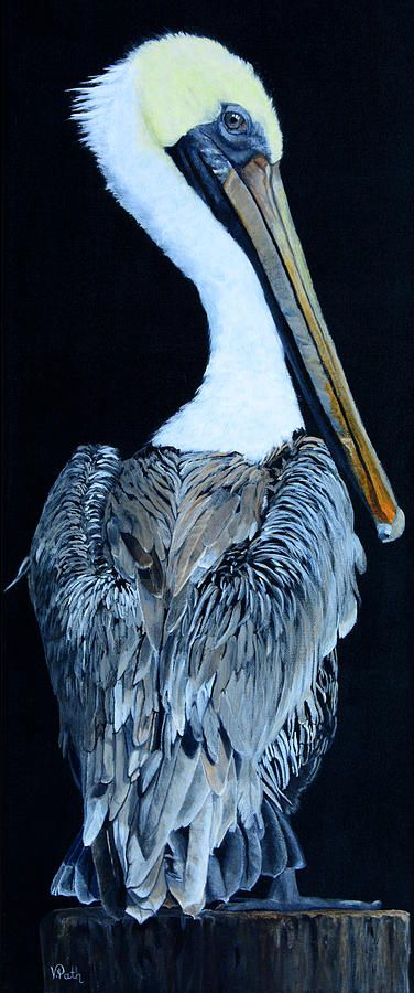 Pelican by Vicky Pat, 2017