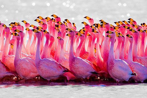 so pink, so pretty