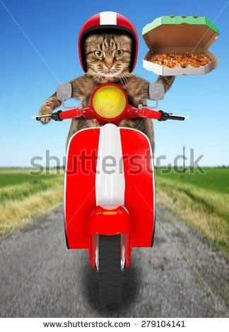 Стоковые фотографии Motorbike Landscape | Shutterstock