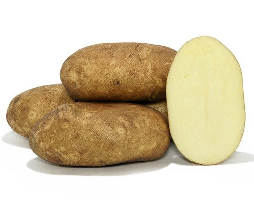 KENNEBEC Potato - 6 Certified Seed (Tubers)