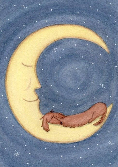 Brown longhaired dachshund doxie sleeping on por watercolorqueen