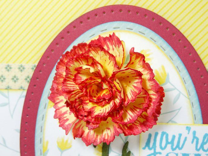 Carnation-Thank-You-Annette-Green-13