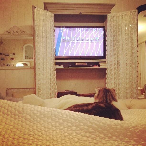 Perfect Tayloru0027s Cat Watching The Olympics :) | ~Taylor Swift~ | Pinterest | Taylor  Swift, Swift And Bedrooms