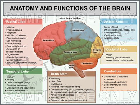 the 25+ best brain anatomy and function ideas on pinterest | brain, Human Body