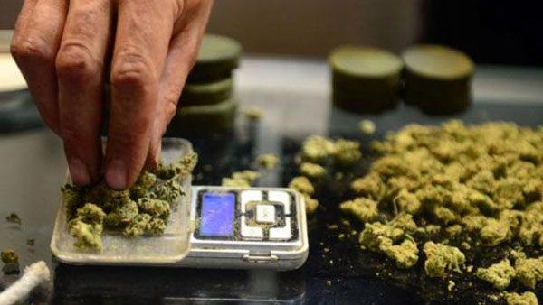 Uruguay venderá marihuana legal en las farmacias a partir de 2016 | Radio Panamericana