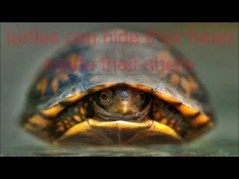 FUN TURTLE FACTS FOR KIDS - YouTube