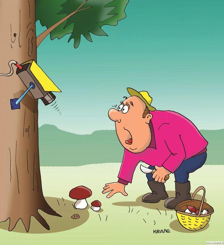 либо картинки смешные лес грибы бережно хранит