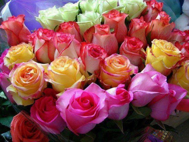 Flatcast Radyo Tema ve İndex için Çiçek resimleri,radyo temaları için gül,tema index için resimler,forumgazel,birbirinden güzel güller,benzersiz gül resimleri,muhteşem resimler,renkli resimler,çiçek resimleri indir,forumgazel