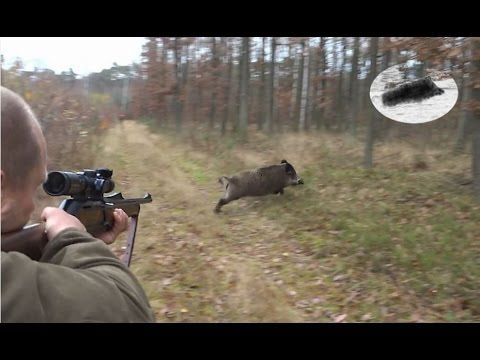 Ultimate Hog Hunting!  Wild Hog Hunting!  Wild Boar Hunting!  Hog Hunting - YouTube http://riflescopescenter.com/category/bushnell-riflescope-reviews/