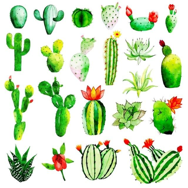 Artistic Watercolor Cactus Collection Watercolor Color Paint