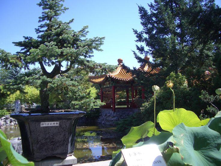 Several Bonsais at the International Buddhist Society Temple