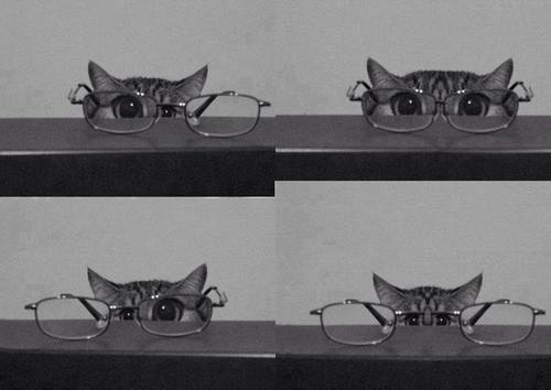Cat on glasses