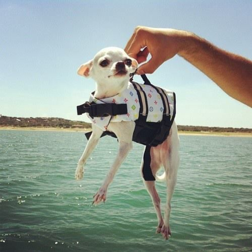 even on water our babies need to be safe and wear life jackets!