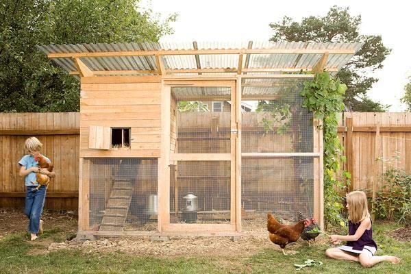 Creșterea găinilor ouătoare sau din rase de carne este o activitate atractivă pentru orice familie care dorește să își asigure o alimentație lipsită de riscuri. Pentru a crește însă în cele mai bune condiții păsările de curte, aveți...