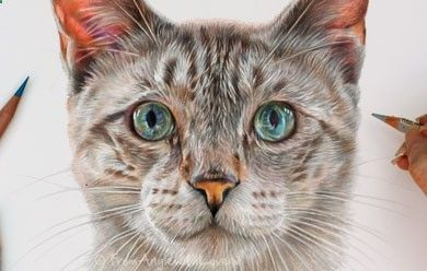 Pencil Portrait Mastery - Pencil Portrait Artist Monty - Siamese Cat Portrait by Coloured Pencil Artist Angie Discover The Secrets Of Drawing Realistic Pencil Portraits