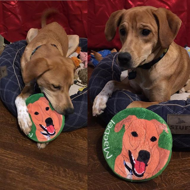 8118f5a44fd2acdac42758a542c741cc frisbee the cutest 43 best personalized dog frisbees images on pinterest toy, toys