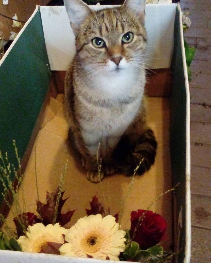 """49 aprecieri, 2 comentarii - Floraria Dorothy's (@florariadorothys) pe Instagram: """"The Help s01e02.. #grigore #catintheflowershop #clujcats #catsofcluj #napocats #cluj #clujlife…"""""""