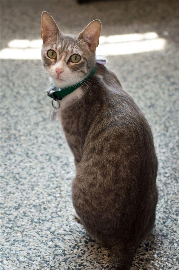 1 600 902 Pixels Cat Adoption Warrior Cats Pets