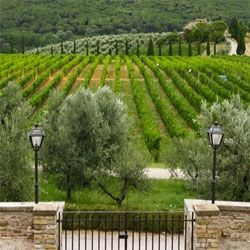 The Castello di Gabbiano estate built in 1124 in the heart of Chainti.Province of Florence Tuscany