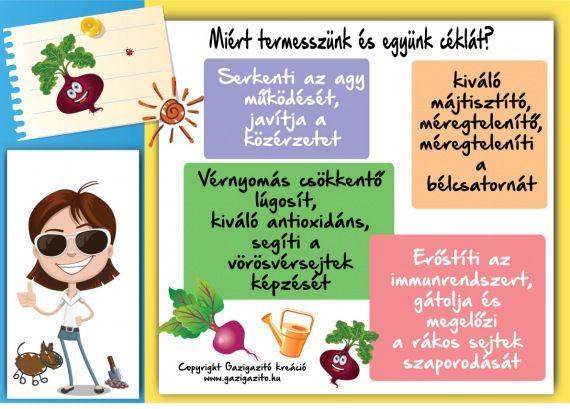 Cékla - Beta vulgaris - termesztése - gazigazito.hu