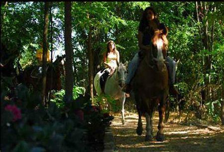 Vina La Playa Hotel and Winery.. horseback riding trip..#Colchagua