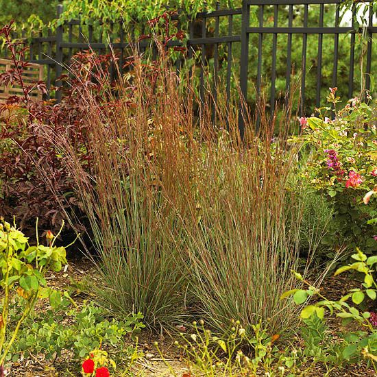 91 best images about ornamental grasses on pinterest sun for Ornamental grasses that grow in shade