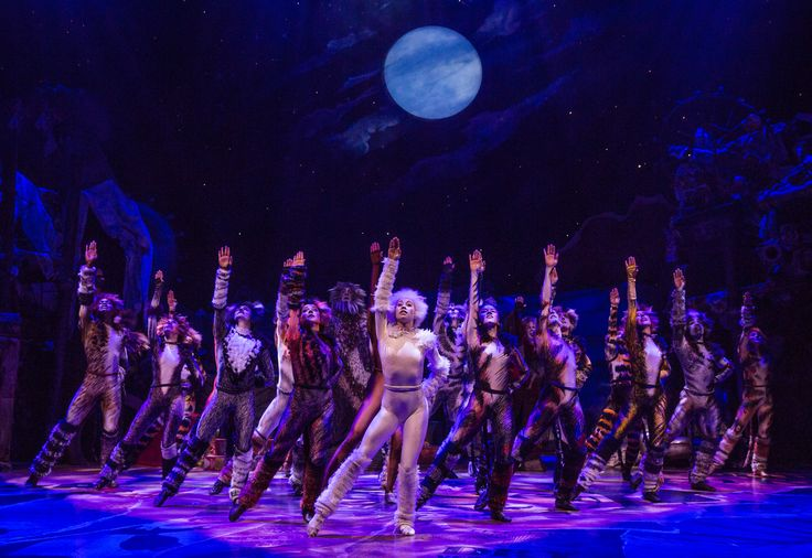 Check out Cats on Broadway!