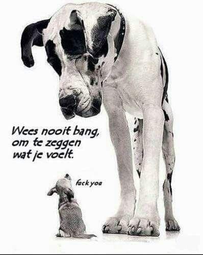 Citaten Over Honden : Beste ideeën over honden gezegden op pinterest