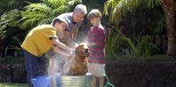 Homemade Dog Shampoo for Itchy Skin | eHow.com