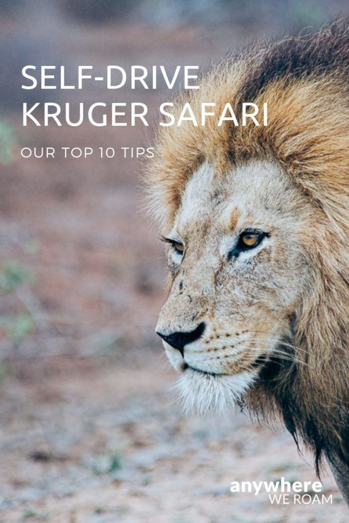 10 tips for the best self-drive Kruger safari | TRAVEL to