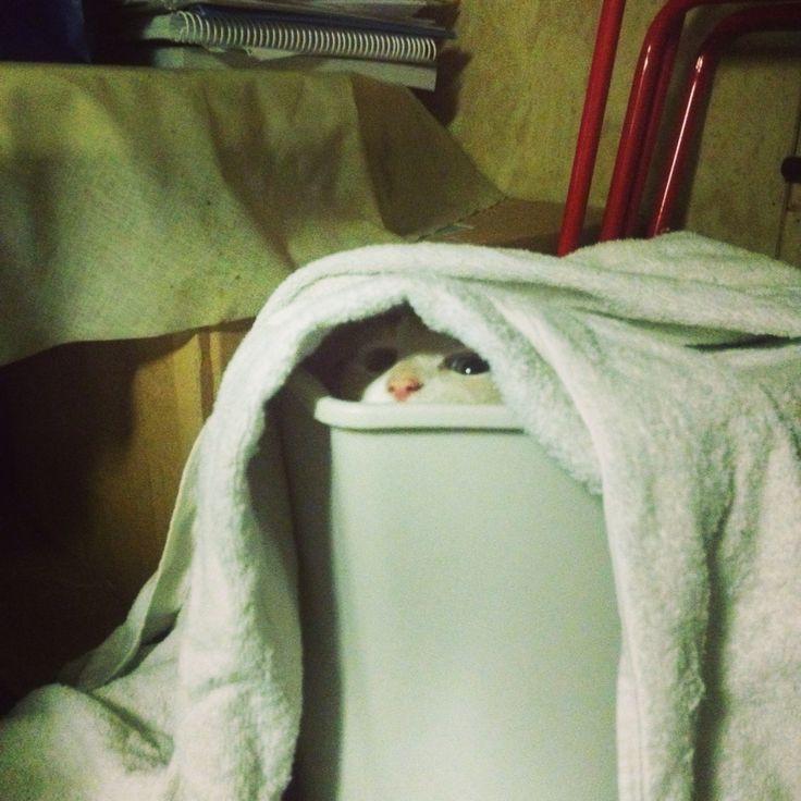I'm the best at hide n go seek!!