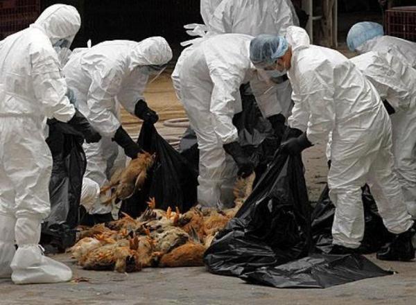 Ministerul Afacerilor Externe informează cetăţenii români care se deplasează sau se află deja pe teritoriul Olandei cu privire la depistarea unor focare de gripă aviară în anumite zone din acest stat.