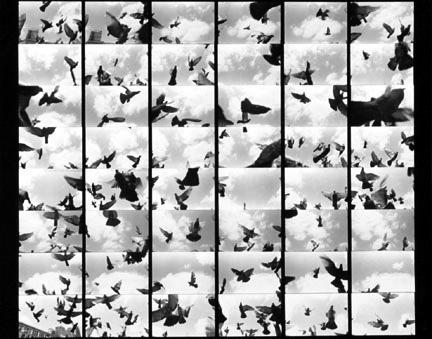 I absolutely love Barbara Crane and her work. #Barbaracrane #photography #birds