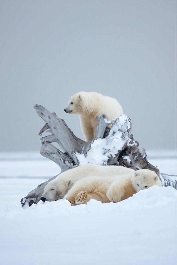 pile of bears