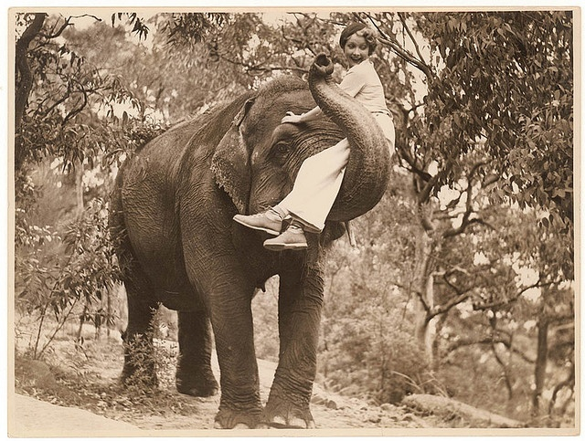 Film star Helen Twelvetrees on an elephant, Taronga Park Zoo, Sydney, 1936-7 / Sam Hood    An American actor who starred in the Australian film Thoroughbred. From the collections of the Mitchell Library, State Library of New South Wales http://www.sl.nsw.gov.au          Persistent url: http://acms.sl.nsw.gov.au/item/itemDetailPaged.aspx?itemID=153778