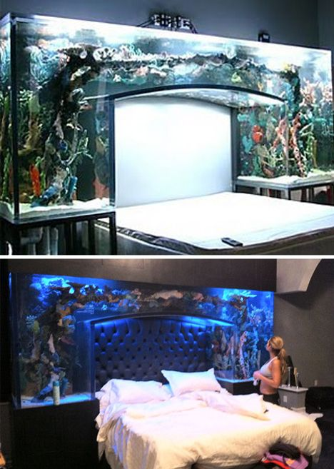 (Images via pixmag, sweetandlowshow)    This custom bed aquarium is surely something to behold. There are few things that would be as relaxing as staring up into a gently lit aquarium while drifting off to sleep.