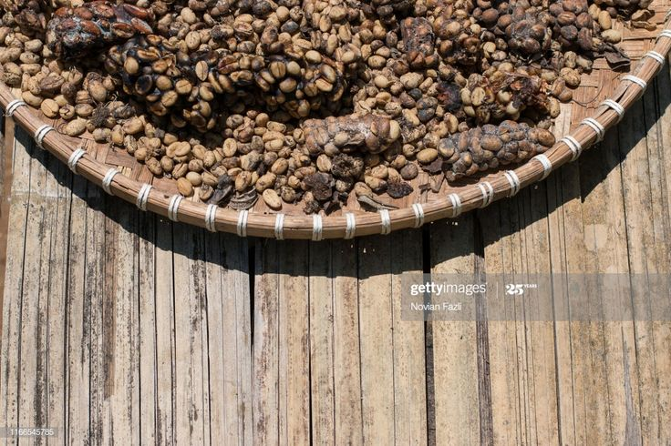Kopi Luwak Or Civet Coffee Beans Are Being Dried In The