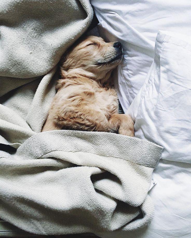 Картинка доброе утро животное