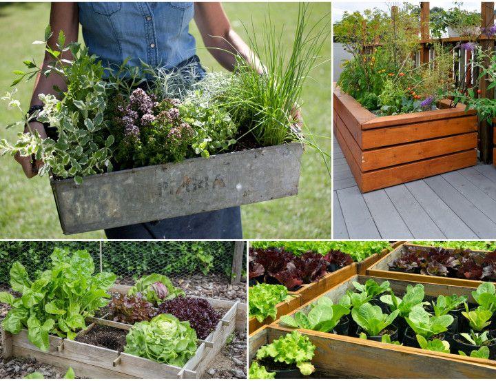 Uprawy W Skrzyniach To Latwe Plants Planters Planter Pots