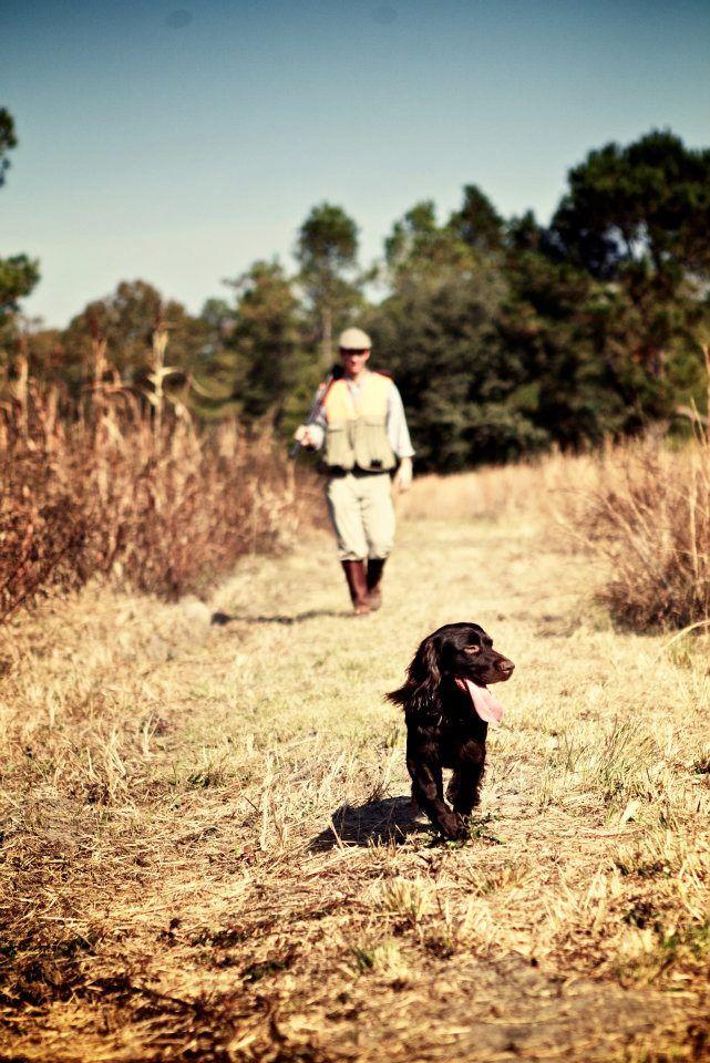 Quail Hunting with Boykin Spaniel