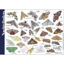 Afbeeldingsresultaat voor Herkenningskaart Planten