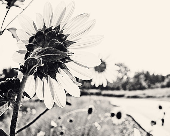 black and white sunflowers by Katie Lloyd PhotographyArt Nature, Lloyd Photography, Inspiration Ideas, Black And White, Fine Art, Katy Lloyd, 16X20 Fine, Photography Inspiration, Photography Ideas