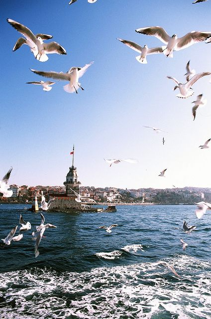 Maiden's Tower & the seagulls istanbul / turkey