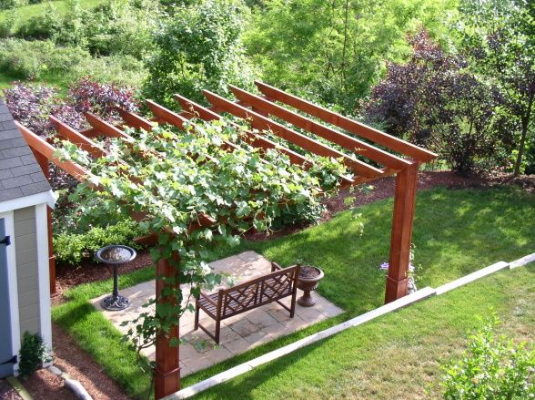Grape vine growing over the top of a small timber frame pergola area. Nice touch!
